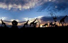 Africam Safari Park, Puebla, Mexico
