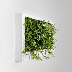 indoor vertical garden in frame