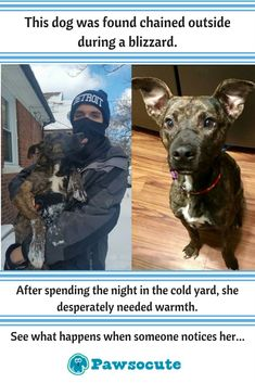 After spending the night in the cold yard, this dog desperately needed warmth. Fortunately, on Tuesday, a neighbor saw the 2-year-old dog out in the snowy weather - and things changed forever!