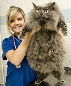 Big kitteh