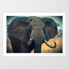 Wild Elephant in Kenya Prints