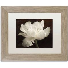 Trademark Fine Art 'White Tulip II' Canvas Art by Cora Niele, White Matte, Birch Frame, Size: 11 x 14, Multicolor