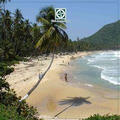 Playa Grande es un paraíso ubicado en #Choroní, es ideal para disfrutar de unos días de descanso o placer. ¡Ven y conócelo!