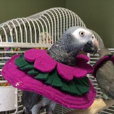 Timmy is showing off this soft, yet thick fleece bird collar designed to deter feather picking. #birdcollar http://www.birdsupplies.com/bird-collar-familiarization/