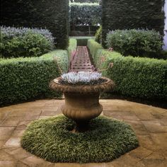 Living Symmetry ‹ Peter Fudge - doing something like this; succlents in pot Formal Gardens, Outdoor Gardens, Fudge, English Garden Design, Home And Garden Store, Australia Landscape, Garden Urns, Container Plants, Native Plants