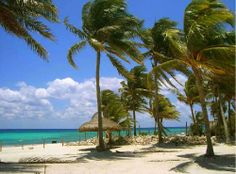 Azul Fives - Playa del Carmen condos, Living Riviera Maya Real Estate, Playa Del Carmen, Quintana Roo real estate listings, homes for sale. http://www.playadelcarmenrealestatemexico.com/Azul_Fives_Condos/page_2225523.html