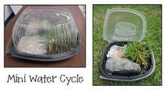 mini water cycle