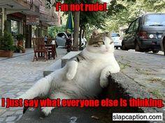 Cat tells it like it is