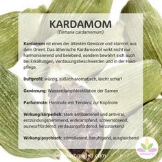 Cardamom is one of the oldest spices and comes from the Orient. The ethereal … - DIY Beauty Tutorials Ideen Old Spice, Alternative Medicine, Natural Medicine, Natural Healing, Ayurveda, Aromatherapy, Affirmations, Essential Oils, Spices