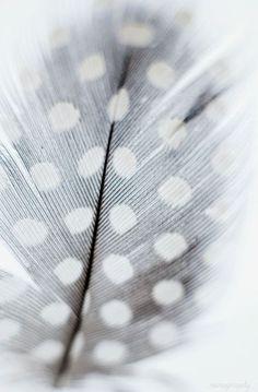 Still Life photography, Feather Print, Polka Dot