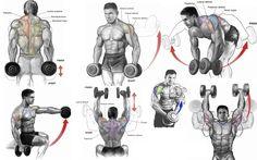 Shoulder Workouts With Weights, Shoulder Dumbbell Workout, Shoulder Mass Workout, Shoulder Workout Routine, Back Workout Men, Shoulder Gym, Chest Workout For Men, Gym Workouts For Men, Gym Workout Tips