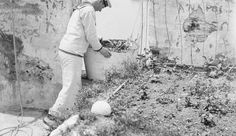 A Royal Navy rating tending the garden established at the signal station on the White Tower, Salonika. Navy Rates, Royal Navy, Old Photos, Greece, Tower, Museum, Couple Photos, Painting, Collection