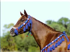 Arabian Horse Show Halter  & Breast Collar | Native Arabian Show Halter and Breastcollar