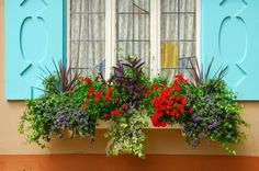 Hip Slope Mama: Hip Tips for Summer Window Boxes from Kerry Quade of Root Stock & Quade