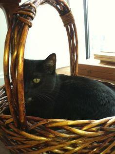 Basket Cat cute cat