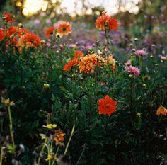 #ridecolorfully #katespadeny #vespa  errands for flowers