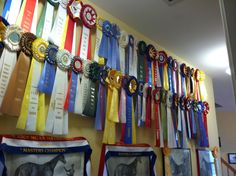 Display ribbons on Ikea curtain wire Horse Ribbon Display, Show Ribbon Display, Horse Show Ribbons, Ribbon Quilt, Ribbon Wall, Equestrian Decor, Equestrian Style, Ikea Curtain Wire, Ikea Cat