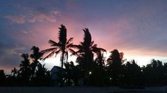 Sunset by the Coconut Trees