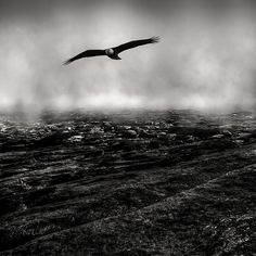 Bald Eagle Hunting The Fog Line - Original black and white fine art nature wildlife landscape photography by Bob Orsillo.  Copyright (c)Bob Orsillo / http://orsillo.com - All Rights Reserved. Buy art online. Buy photography online  Bald Eagle hunting the fog line over rugged rocky landscape