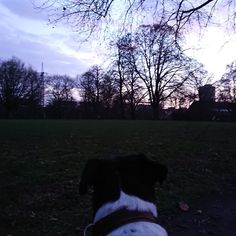 Yoga Dog Have a nice Saturday evening. Yoga Dog, Celestial, Sunset, Nice, Dogs, Outdoor, Outdoors, Pet Dogs, Doggies