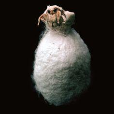 silk:cocoon