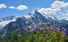Em Grindelwald, o contraste entre céu azul, flores e pastos verdes com os picos nevados forma um cenário perfeito #Suíça