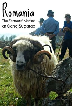 Things to do in Maramures, northern Romania. The weekly farmers and livestock market at Ocna Sugatag is a great way to get a glimpse of traditional life in the villages of this part of Romania http://simpleliferomania.com