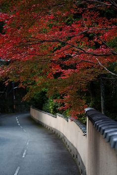 The autumnal leaves of Kyoto yase.