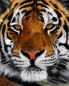 http://www.onlineartdemos.co.uk/misc_images/on-easel/Tiger%20portrait%20eBay/tiger-oil-painting.jpg