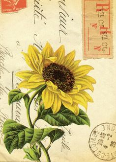 Sunflower on an envelope