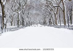 """L-BB """"Winter in New York"""" : Almost like brush-strokes of brown over white paper, the trees seem almost like an intentional work of art. The snow is fresh and untouched, and hanging on a wall, this photograph would lend the same freshness to your home."""