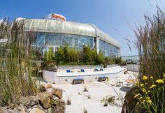 Abandoned tropical pool