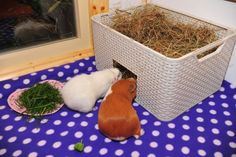 Cut an entrance in a storage container and fill with delicious hay! Photo by Fairy Magic/Anita Cross