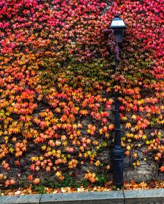 "TOWN&COUNTRY on Instagram: ""Autumn streetscapes. 🍂 #regram 📸: @herve_in_paris #Montmartre #Paris"""