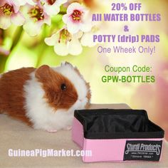 Great stuff at the Market! www.guineapigmarket.com