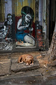 All Creatures Great and Small, Brazil photo by Steve McCurry Steve Mccurry, World Press Photo, Stefan Sagmeister, Afghan Girl, Picture Stand, Poor Dog, Contemporary Photography, Outdoor Art, Street Photography