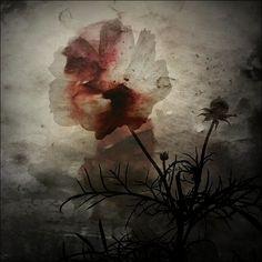 Bloodflower by Nachtblau.deviantart.com on @DeviantArt