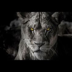 I hope you'll rise up with the strength of a lioness #nevergiveup #panthera
