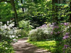 Strolling through the azalea woodland garden at Winterthur.