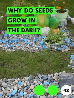 How to Make Beer Fertilizer. You can make a fantastic lawn fertilizer with beer. Gather up those half-empty cans and get ready to whip up a grass fertilizer for your lawn. Learn how to make this super easy plant fertilizer today. Grass For Shady Areas, How To Lay Sod, Drift Roses, Boston Ferns, Weeds In Lawn, Garden Weeds, Avocado Tree, Mango Tree, Lawn Maintenance
