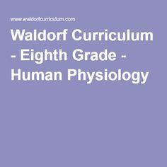 Waldorf Curriculum - Eighth Grade - Human Physiology