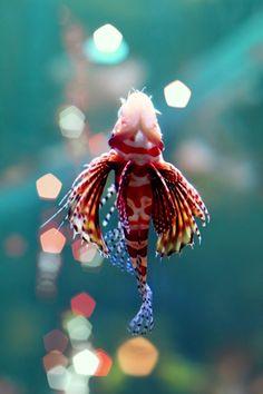 crimson swim by FikreesProjects _______ 30 Unbelievable Underwater Photography Underwater Creatures, Underwater Life, Ocean Creatures, All Gods Creatures, Life Under The Sea, Life Aquatic, Underwater Photography, Bokeh Photography, Amazing Photography