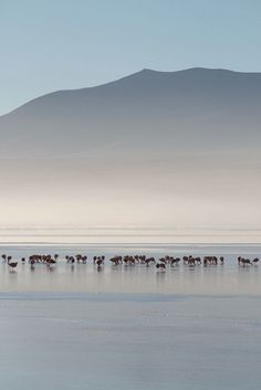 A gathering of birds around the serene Salar de Uyuni, Bolivia.
