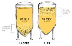 Home Brewing, About Me Blog, Home Brewing Beer