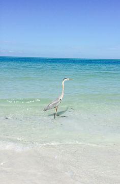 Lido Beach, Animals, Animales, Animaux, Animal, Animais