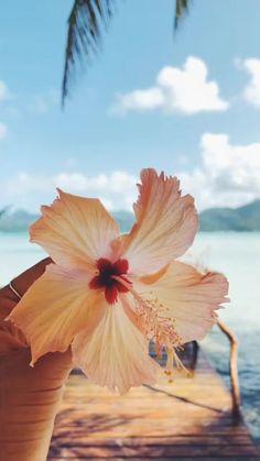 Ocean Wallpaper, Summer Wallpaper, Flower Wallpaper, Wallpaper Backgrounds, Pink Wallpaper, Hawaiian Flowers, Hibiscus Flowers, Tropical Flowers, Beach Aesthetic