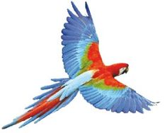 uccelli esotici in volo - Cerca con Google