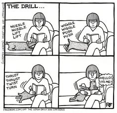 Off The Leash Doggy Cartoons Shop: The Drill - Throw Pillow: A creation by Rupert Fawcett from the Off The Leash (all rights reserved), a daily cartoons range featuring real conversations between dogs! Dachshund Funny, Dachshund Love, Funny Dogs, Daschund, Corgi Funny, I Love Dogs, Puppy Love, Cute Dogs, Animals And Pets