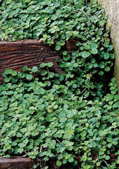 5 espécies de plantas para cultivar no banheiro da sua casa