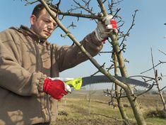 Young gardener pruning apple tree branches with pruning saw Pruning Fruit Trees, Tree Care, Hand Saw, Apple Tree, Gardening Tips, Outdoor Decor, Tree Branches, Sad, Moment